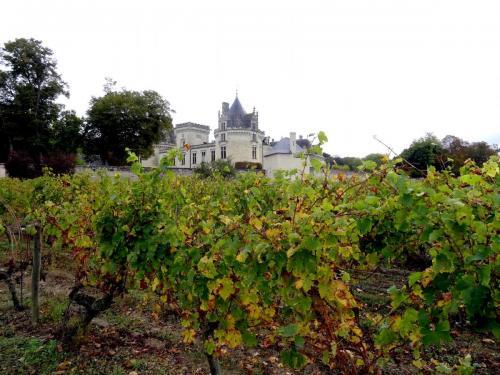 2018 - 06 Château de Brézé (01)